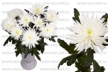 Анастасия бел.1G
